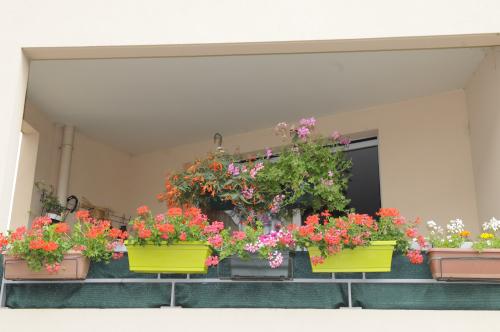fleurs 024.JPG